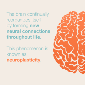 website-neuroplasticity-300x300